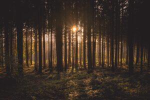 De zon breekt door de bomen in een bos