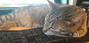 Thuiswerken met je kat